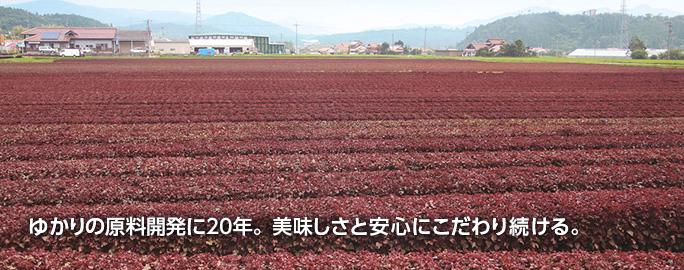 ゆかりの原料開発に20年。美味しさと安心にこだわり続ける。