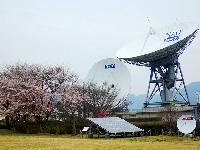 2015年4月 桜満開 [2]