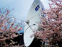 2015年4月 桜満開 [3]