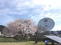 2016年4月 満開の桜 [1]